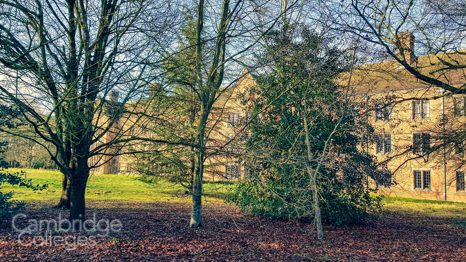 Trees in the grounds of Girton college, Cambridge